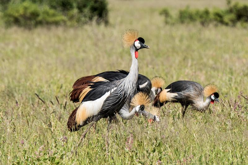Samburu (51 of 70).jpg