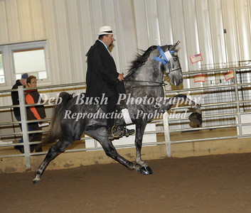 CLASS 3 THREE YR OLDS OPEN