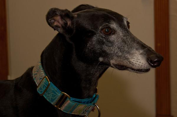 FoG Greyhounds