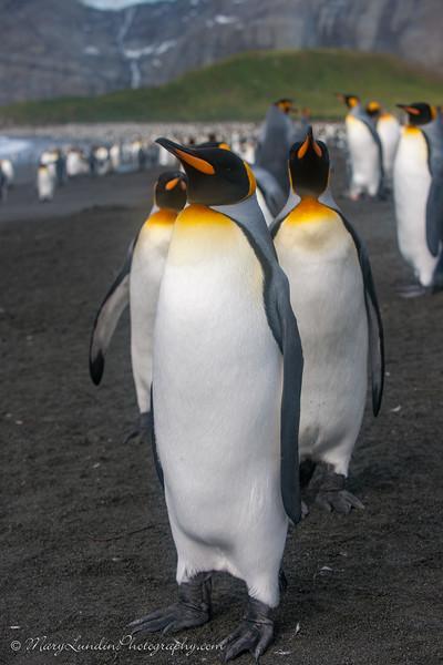 Antarctic-104