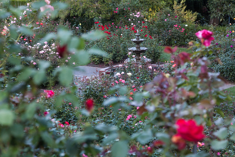 International Rose Test Garden, Portland