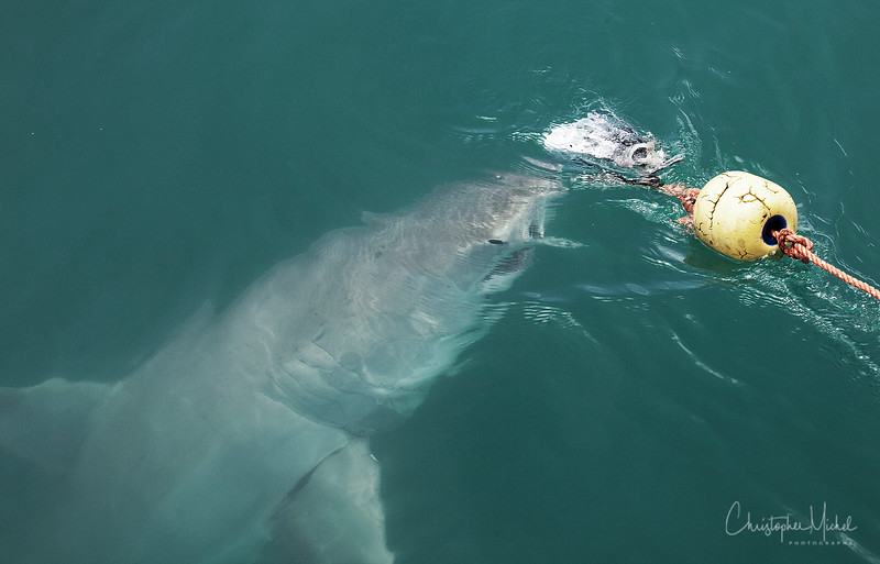 010209_shark dive_7604