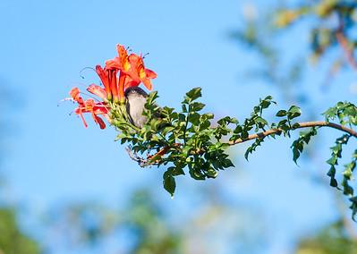 Morning Birds in Patio 1.25.15