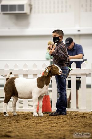 Breeding Goat Showmanship