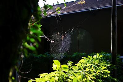 Spiders & Butterflies