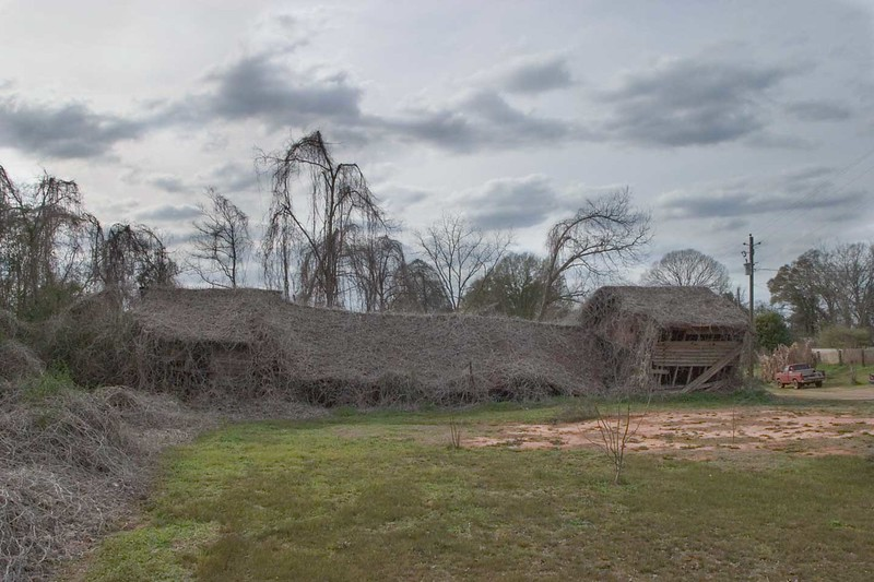 Kudzu covered barn near Abbeville, Ala. in winter