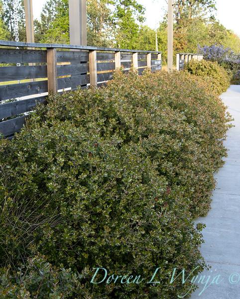Garden at Argyle winery_1060.jpg