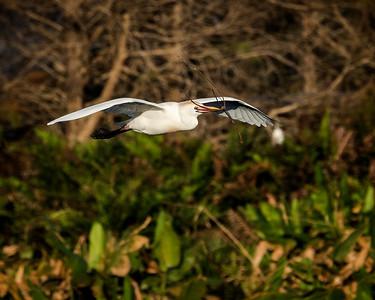 Birds in Flight (#89)