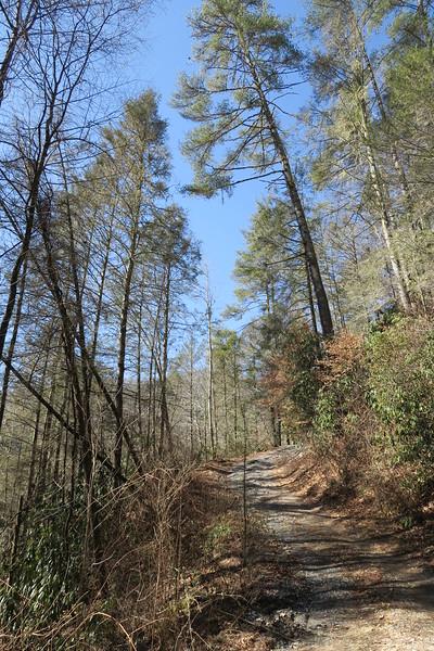 Grays Ridge Access Trail