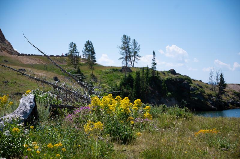 Yellowstone-20200804-8491.jpg