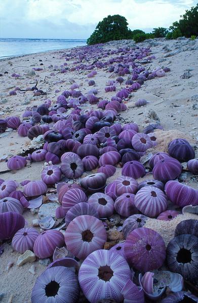 beach shells.jpg