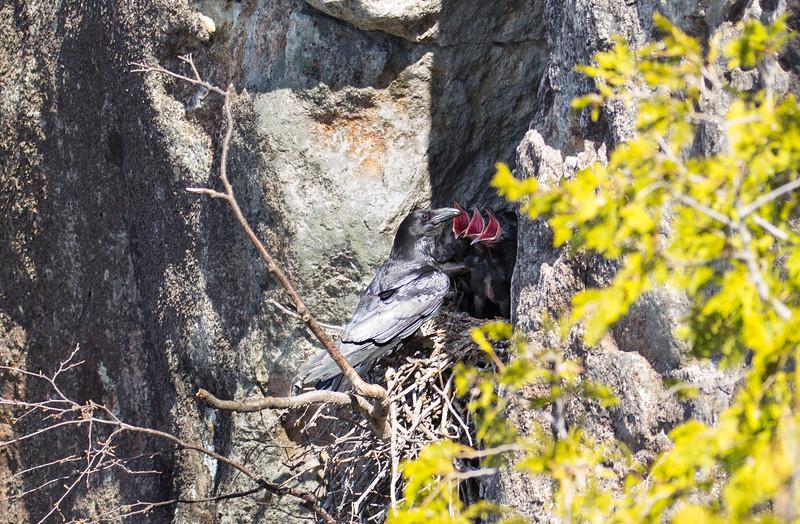 Ravens Nest-8141.jpg