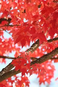 2005-10 Leaves