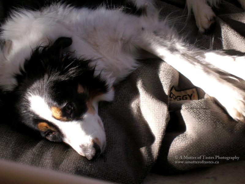 JAYCE sleepy sun.jpg