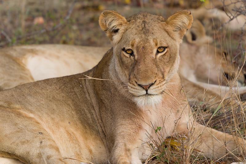 Safari-0357.jpg