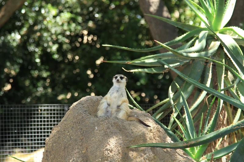 San Diego wild animal pakr 201700017.jpg