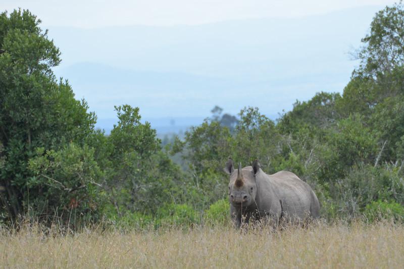 East Africa Safari 7.jpg