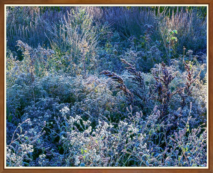 Frost, Shadow And Light