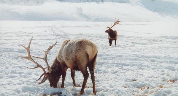 Jackson Hole-National Elk Refuge