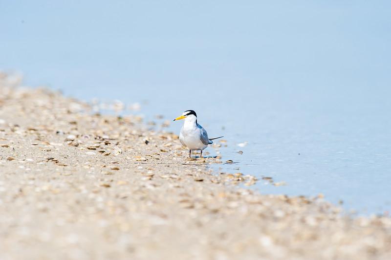 Fort Desoto Birds 2-32.jpg