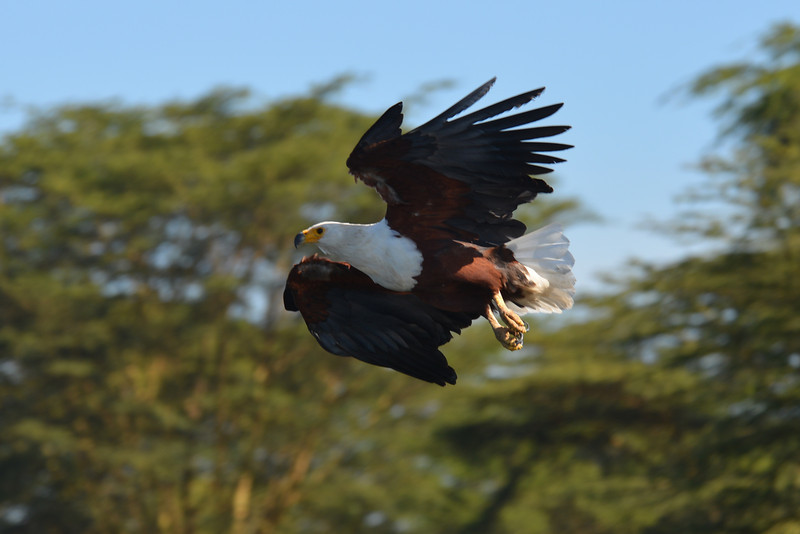 East Africa Safari 147.jpg