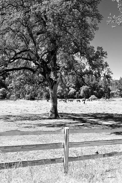 horse ranch 6-7-2012.jpg