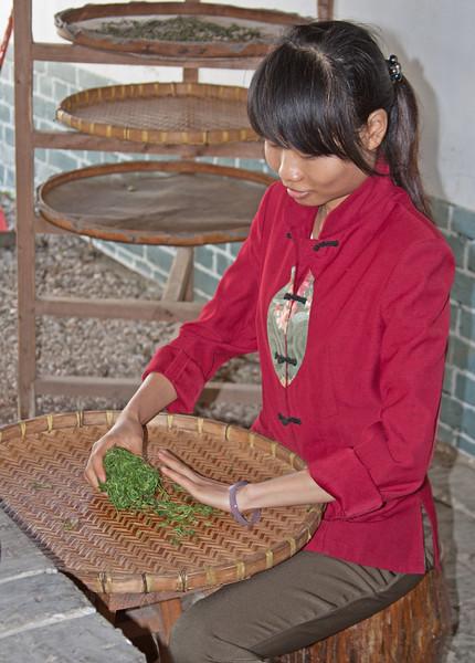 Bruising fresh tea leaves, Guilin, China