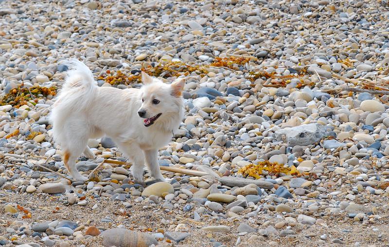 dogs_beach-017.jpg