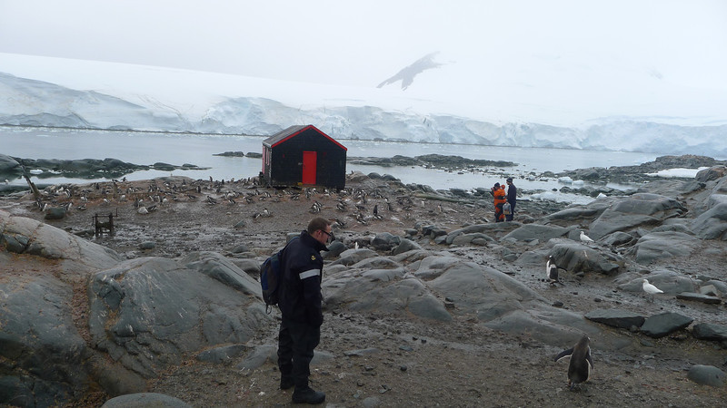 Historic British Base A, Port Lockroy on Goudier Island.   Royal Navy visitor checks out the Penguins.