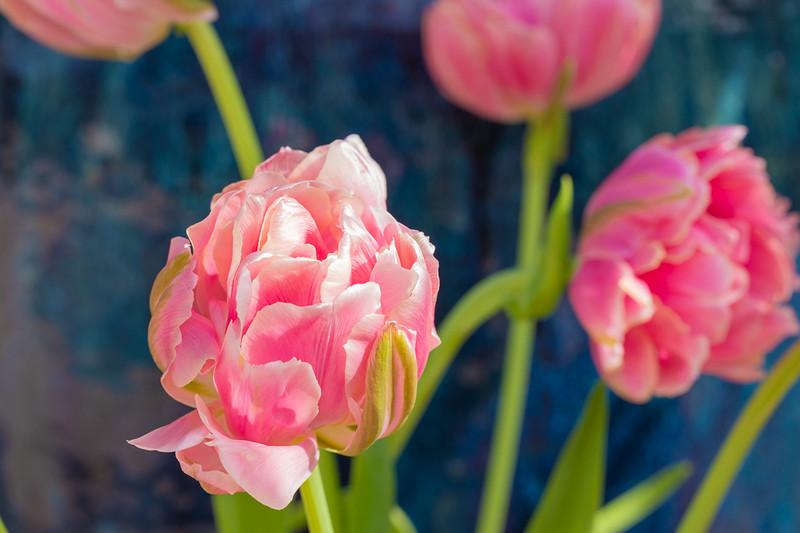 FineArt_Flowers_051520_0648.jpg