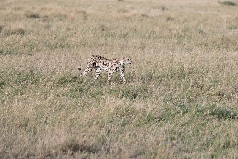 Africa - 101616 - 5747.jpg