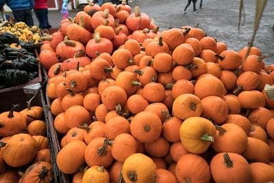 Pumpkin Picking 2016