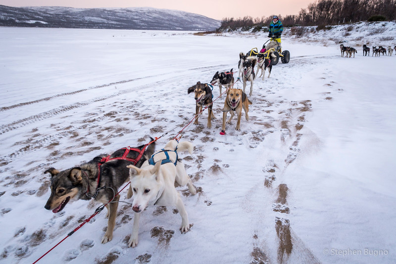 Dog Mushing-9926.jpg