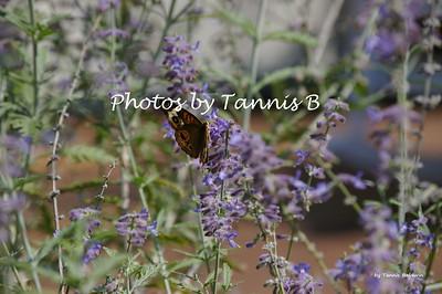 2010-Butterflies and moths