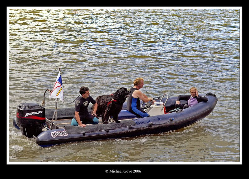 Newfoundland dog in boat Bristol Harbour Festival (64632986).jpg