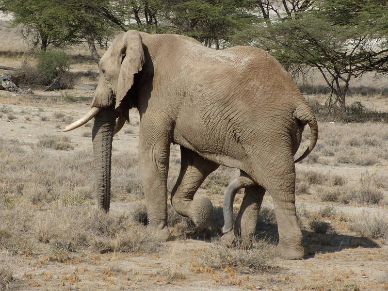 Elephant EMC 058.jpg