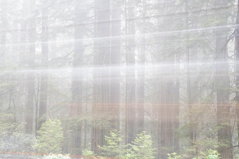 redwoodsFin29-1230.jpg