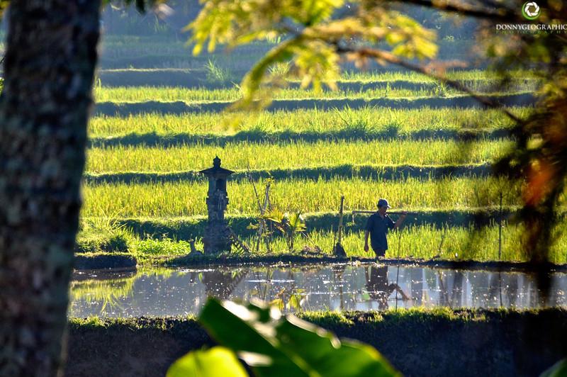 Bali-602.jpg