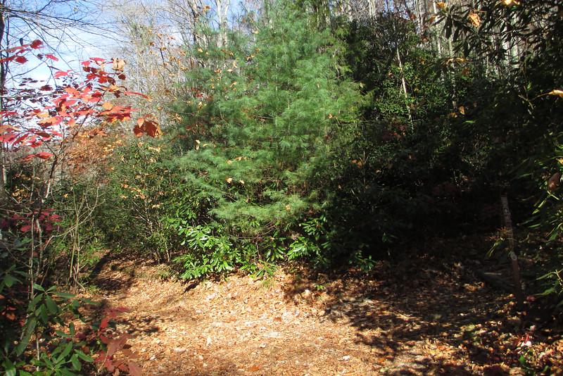 Little Green-Mac's Gap Trail Junction - 3,830'