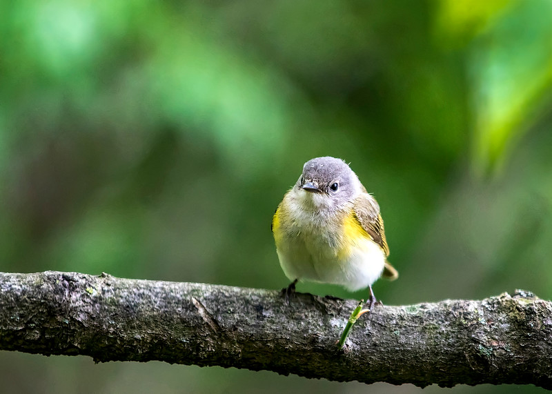 YoungBird_02.jpg