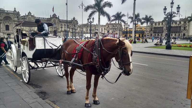 horse carriage in Plaza Mayor - Things to do in Lima