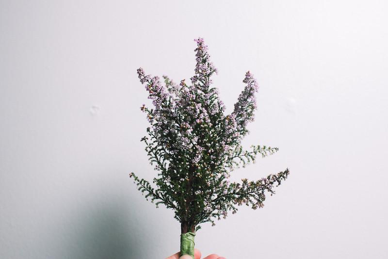 Meta Spring14.jpg