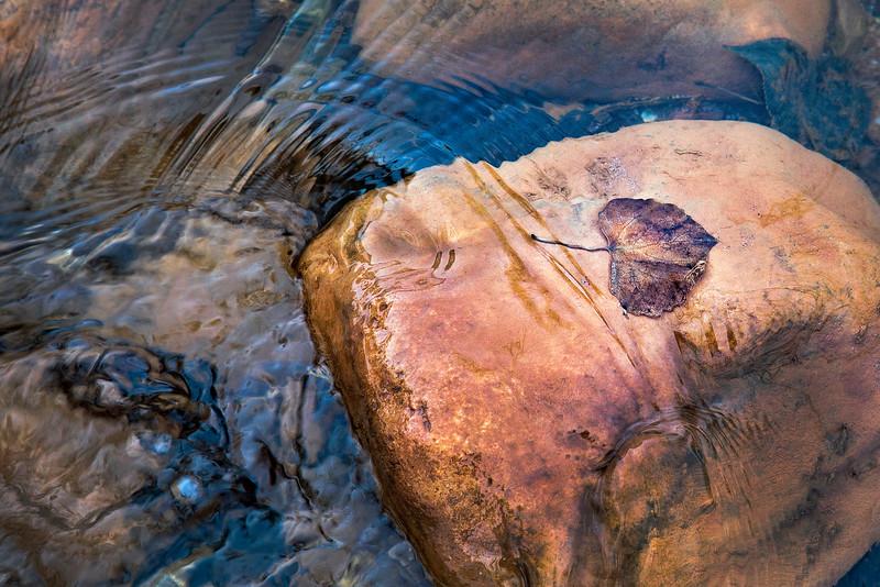 Cub Creek Gold.jpg