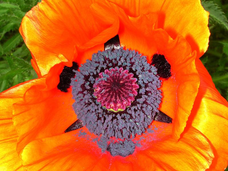 poppy 68  www.tabblo.com/studio/stories/view/254790/
