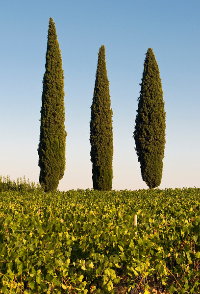 Landscape with Three Typical Mediterranean Cypress Trees (Cupressus sempervirens or Pencil Pine), Tuscany (Toscana), Italy
