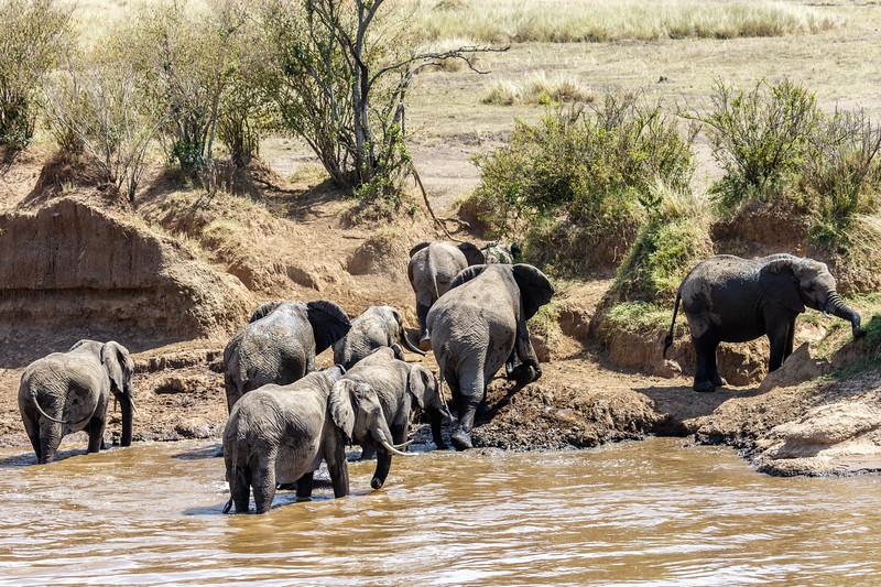 Kenya 2015-03849.jpg