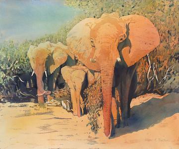 """The Matriarch"" (watercolor) by Elizabeth Burin"