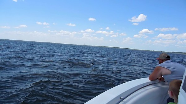 Jekyll Island Boat Tours Dolphin Video Galley
