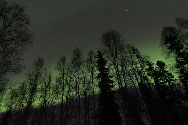 Birch Aurora