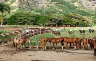 The horses at Kualoa Farm